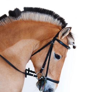 pferde flohmarkt termine